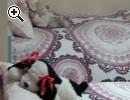 Cameretta bimbi a soppalco ottimo stato - Anteprima immagine 1