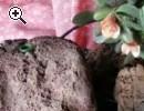 Bellissima fioriera - Anteprima immagine 1