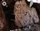 Bellissima fioriera - Anteprima immagine 3