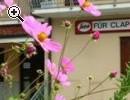 Fabbicato già bar-ristorante in Friuli -vendo - - Anteprima immagine 1